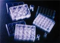 细胞培养池 353097