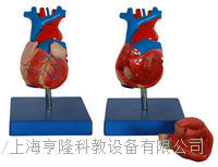 自然大心脏解剖模型 KAH/A307A
