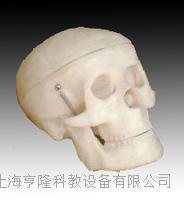 小型头骨模型 KAH/A106