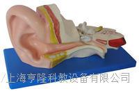 中耳解剖模型 KAH/A303B