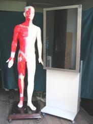 多媒體人體針灸穴位 交互數字平臺