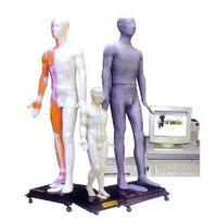 多媒體人體按摩穴位電子模型 MAW-170A