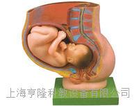 骨盆含妊娠九个月胎儿模型 KAH/A21017