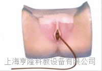 女性导尿模型 KAH-M2
