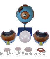 眼球放大模型 KAH/A17101
