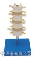 正常腰椎组合(四节) KAH/A11109/3
