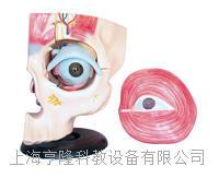 眼眶及眼周解剖 KAH2135