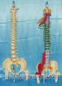 大型软脊椎挂座豪华模型、多功能软脊椎综合演示模型 GD0148D-GD0148M5