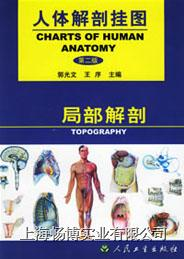 医学挂图|《人体解剖挂图》-局部解剖挂图 CBB-GT-9(67张)