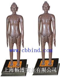 针灸铜人|光绪侗人模型|仿古针灸铜人模型 CBB-ZD01