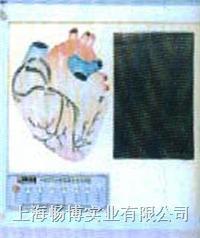 医学教育装备|心脏传导系电动模型 SME07