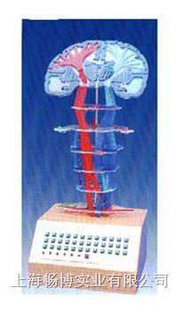 电动医学模型|微电脑**神经传导直观模型 SME02