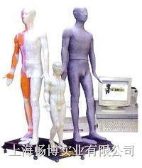 中医针灸|针灸模型|多媒体按摩点穴电子人体模型