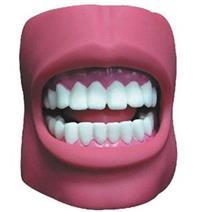 牙护理保健模型(带脸颊)(自然大) KAB/K4