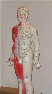 中医针灸模型光电感应多媒体人体穴位发光模型