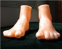 中医推拿足部按摩模型(20cm)