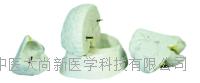 脑解剖模型 SX-445