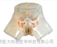 高级透明刮宫模型 SX-602
