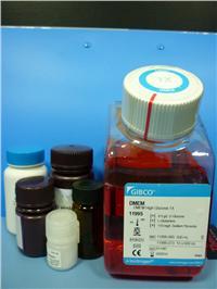 Collagenase胶原酶IV(原装) orj-1022