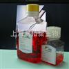 羊间充质干细胞无血清培养液500ml/Kit  G2012MSCM