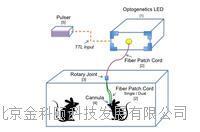 Prizmatix在体光遗传解决方案 IN-VIVO Optogenetics Toolbox