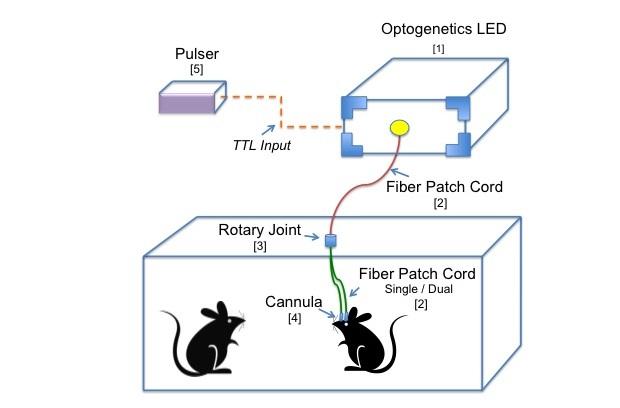 光遗传学及成像系统