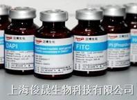 四甲基罗丹明-5(6)-异硫氰酸(混合物) 10 mg