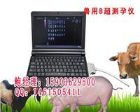 羊用B超多少钱一台羊用B超的价格 hrq-6000av