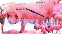 福建龙岩哪里卖猪用B超 HRQ-F218