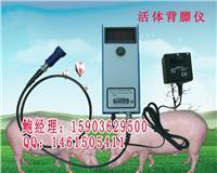 母猪用背膘测定仪厂家哪个牌子的好/报价多少 B-07