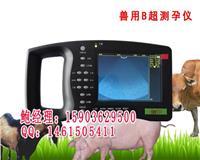 动物B超价格/动物B超多少钱/动物B超 HRQ-5000AV