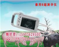 西北招商采购牛羊动物彩色B超最低报价 HRQ-P09