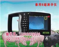 湖南高清彩色兽用B超机多少钱一台 HRQ-5000AV
