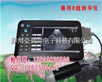 手持式母猪B超机使用方法和注意事项 HRQ-5100AV