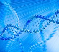 microRNA靶基因验证