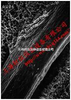 RW1914250加强型混合纤维素酯滤膜|RW预过滤膜 RW1904700  RW1914250