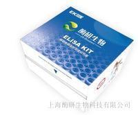 RNA纯化试剂盒