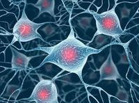 细胞培养实验