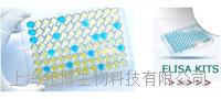 FMS样酪氨酸激酶3配体(Flt3L)检测试剂盒