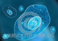 人皮肤癌组织源细胞培养试剂盒说明书 CS-C3902