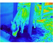 動植物紅外圖片