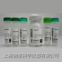 Recombinant Human LEC/NCC-4 (CCL16)|重组人肝细胞表达趋化因子