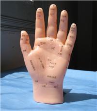 中醫推拿手部按摩模型