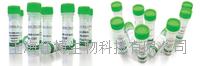 半胱氨酸蛋白酶抑制剂B(CSTB)重组蛋白